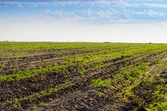 Green fields Royalty Free Stock Images