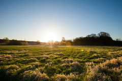 Green fields at sunrise Royalty Free Stock Photography