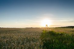 Green Fields during Sunset Royalty Free Stock Photos
