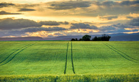 Green fields at sunset in Provence Stock Photos