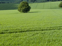 Green fields and tree Stock Photos