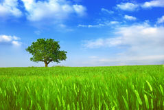 Green fields and tree Royalty Free Stock Images
