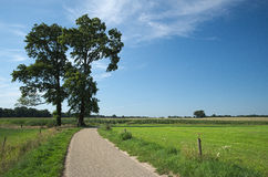 Green fields and a tree near Delden (Overijssel, The Netherlands). Looking at a tree and lush green fields on a summer day near the small town of Delden. It lies Royalty Free Stock Photos