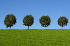 Green fields and trees. On blue sky Royalty Free Stock Photos