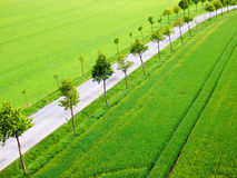 Green fields with trees alley and road Royalty Free Stock Photos