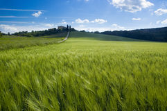 Green fields of Tuscany Stock Photography