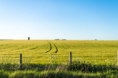 Green fields under a clear blue sky stock images