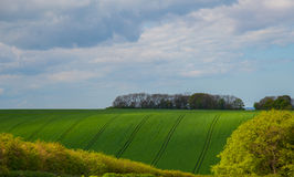Green fields up and down Royalty Free Stock Image