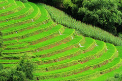 Green fields. Royalty Free Stock Images