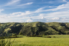 Green fields wheat Basilicata - Italy Royalty Free Stock Photos