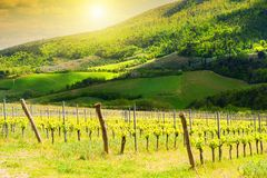 Green fields with young vineyards in Tuscany, Italy. Beautiful spring landscape royalty free stock images