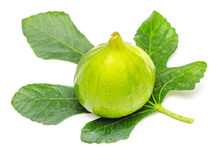 Green fig fruit with leaf isolated on white Stock Photography