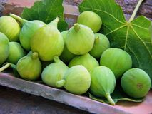 Green Figs Stock Photography