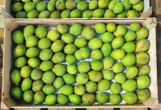 Green figs Stock Photo