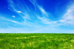Green fild against the blue sky Royalty Free Stock Photos