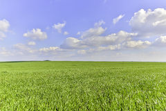 Green fild. Beautiful green fild with clouds in summer Stock Photography