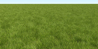 Green filed. Filed of the green grass Stock Photography