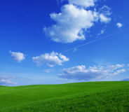 Green filed. Landscape - green filed, the blue sky and white clouds Royalty Free Stock Image