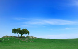 Green filed Royalty Free Stock Image