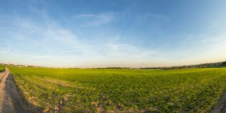 Green filed in the countryside at summer evening royalty free stock photography