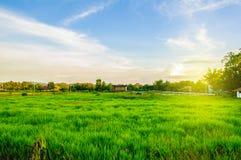 Fresh Green Filed. Green Filed of resort at Wang Num Kiaw Thailand Stock Photography