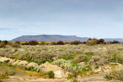 Green Fileds with a Mountain looking like Table Mountain in the. Yellow and Green Fileds with a Mountain in Tankwa Karoo Royalty Free Stock Images