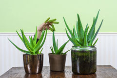 Green Fingers Royalty Free Stock Photos