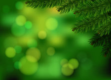 Green fir branch background. Holliday green blurred background with realistic spruce branch. Vector and raster versions Royalty Free Illustration