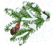 Green fir branch with cones in white snow. Illustration with green fir branch  on white background Royalty Free Stock Images