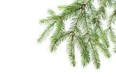Green fir branch for decoration Royalty Free Stock Photography