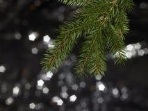 Green fir branch detail Stock Photography