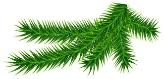 Green fir branch isolated on white Stock Photography