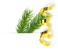 Green fir branch with ribbon Stock Image