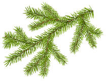 Green fir branch with short needles. Isolated on white vector illustration Royalty Free Stock Photos