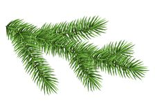 Green fir branch. Spruce branch isolated on white background. Green fir. Realistic Christmas tree. Vector illustration Stock Images