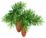 Green fir branch and two cone Royalty Free Stock Photography