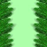 Green Fir Branches Stock Photo