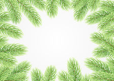 Green fir branches. Christmas background. The frame of the lush fir branches to celebrate xmas Stock Photography