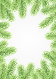 Green fir branches. Christmas background. The frame of the lush fir branches to celebrate xmas Stock Photo