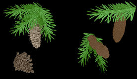 Green fir branches with cones on black Royalty Free Stock Images