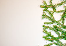 Green fir branches isolated on white background. New Year and Christmas theme Stock Images