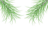 Green fir branches.Vector illustration. Green fir branches on a white background.Vector Stock Photography