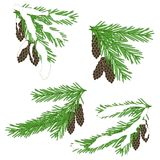 Green fir branches in white snow with brown cones on white Stock Photography