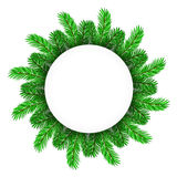 Green Fir Circle Frame. On White Background Royalty Free Stock Images
