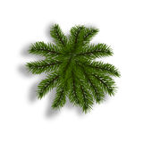 Green fir with realistic shadow. View from above. Fir branches. Isolated on white background. Christmas illustration. Green fir with realistic shadow. View from Royalty Free Stock Photos