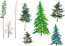 Green fir set Stock Image