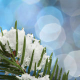Green fir in snow Stock Image
