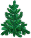 Green fir-tree Stock Photo