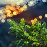 Green fir tree branch with garland lights bokeh Royalty Free Stock Image