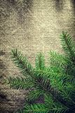 Green fir tree branches on bagging background Royalty Free Stock Image
